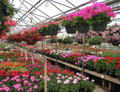 تولید و فروش گیاهان زینتی و فضای سبز